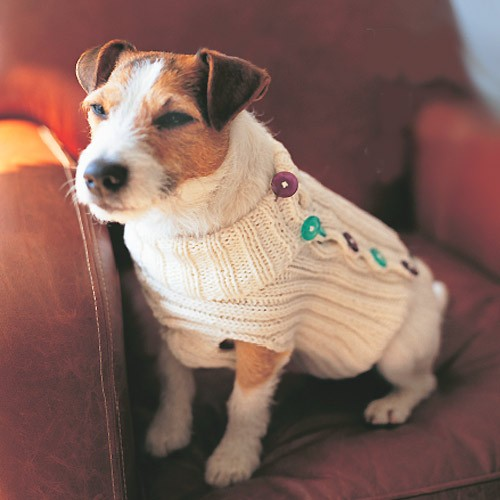 Knitting Pattern For Small Dog Clothes : Dog Sweater Knitting Pattern A Knitting Blog
