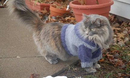 Knitting Pattern For Cat Sweater : Cat Sweater Knitting Pattern A Knitting Blog