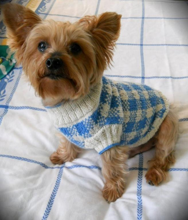 Dog Sweater Patterns Knit : Dog Sweater Knitting Pattern A Knitting Blog