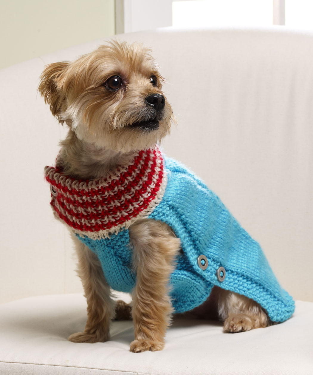 Knitted Dog Sweater Patterns Free : Dog Sweater Knitting Pattern A Knitting Blog